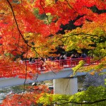 東京都の紅葉人気ランキング10選を紹介⤴