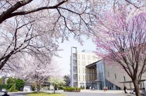 跡見学園桜