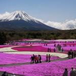 芝桜を鑑賞。関東近辺で見るならばどこ?アクセスは?他の見どころ?