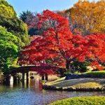 紅葉を見る。日本庭園錦秋の紅葉の名所・名勝を厳選!