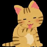 猫のしっぽの動きに見る感情表現とメッセージ性ある?ある??